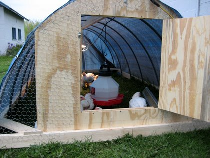 Buy pvc pipe chicken coop plans nakie for Pvc chicken tractor plans