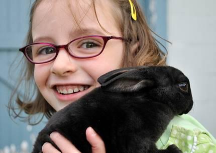 bunny  036